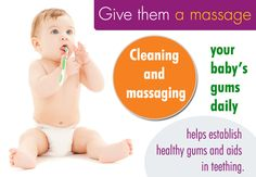 Clean and massage your baby's gums daily.  http://www.eastwichitadentist.com/pediatric-dentistry/index.html