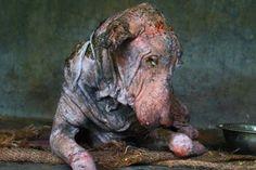 Η αγάπη τον έκανε αγνώριστο: Δείτε τη συγκλονιστική μεταμόρφωση αυτού του σκύλου