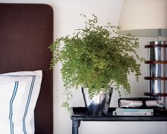 See more images from unexpected ways to decorate with ferns on domino.com
