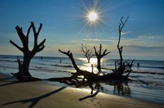 Boneyard Beach Photos in Cape Romain, South Carolina SC