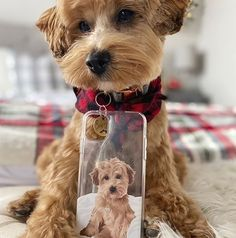 Get YOUR pet hand-drawn & UV printed on a transparent OR colored Eco-friendly phone case now. Animal Phone Cases, Dog Phone, Highest Resolution Picture, Pet 1, Silicone Phone Case, Cute Little Animals, Pet Portraits, Fur Babies, Cute Dogs