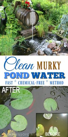 Your Pond Water Murky? A simple way to clean murky pond water within hours without chemicals.A simple way to clean murky pond water within hours without chemicals. Outdoor Ponds, Ponds Backyard, Outdoor Fountains, Garden Ponds, Pond Landscaping, Water Fountains, Garden Fountains, Pond Cleaning, Cleaning Tips