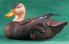 Black Duck Limited Edition Duck Decoy by Roger Desjardins