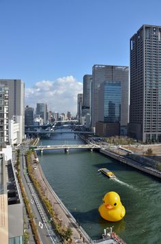 "Osaka, Japan || the duck in the river is from the world wide ""Rubber Duck"" art project by Dutch artist Florentijn Hofman: http://www.florentijnhofman.nl/dev/project.php?id=154"
