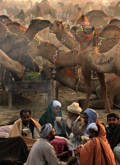 Pakistani camel sellers drink tea at a sacrificial livestock market ahead of the festival Eid al-Adha