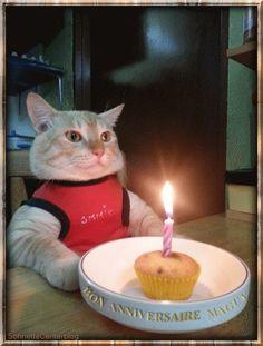 Joyeux anniversaire Nathan