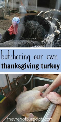 Lessons learned and reflections on our very first time butchering turkeys. It turned out to be an honor to have this experience.