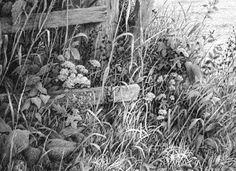 foliage and grass, drawing lessons
