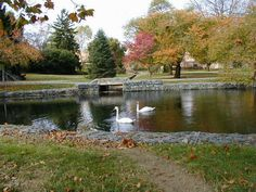 Pond at Millersville University- then State College. This is the only part of it that looked nice. Wrong place for me at the wrong time. I transferred in from a tiny place. The first year was not fun and  the second year was BORING (until Three Mile Island melted down).