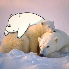 We Bare Bears: Ice bear Ice Bear We Bare Bears, 3 Bears, Bear Wallpaper, Animal Wallpaper, Cartoon Drawings, Cute Drawings, Cartoon Network, Bear Tumblr, Animals And Pets