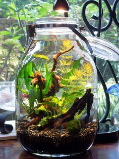 シンプルでお手軽価格のニトリやIKEAのガラスの花瓶(グラスベース)。花だけを飾るのはもったいない!ポプリ入れとして、最近ブームになっているボトルアクアの水槽として…。ニトリやIKEAの花瓶を使った、おしゃれなディスプレイをご紹介します。