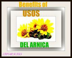 Usos del Arnica / BENEFITS OF ARNICA | tips4chiks | Bloglovin'