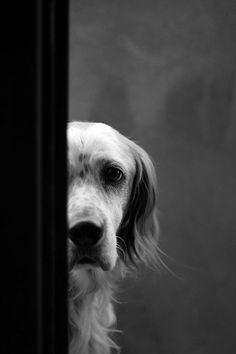 Sad Puppy Dog Face