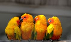 Who's a pretty Polly then? Parrots cluster to enjoy the winter sunshine at Suzhou Zoo in China