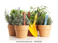 variety of potted garden herbs with shovel isolated on white - stock photo