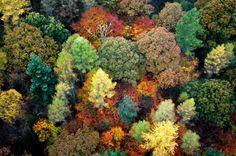 Lingmoor Fell, Britain Autumn Woodland Aerial View Lingmoor Fell by Joan Bryden