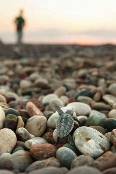 umut... Baby Sea Turtles, Cute Turtles, Turtle Baby, Animals Beautiful, Cute Baby Animals, Beautiful Creatures, Animals And Pets, Funny Animals, Tiny Turtle