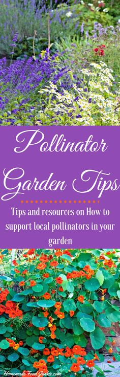 Pollinator Garden Tips