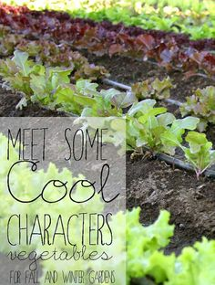 cool weather gardening