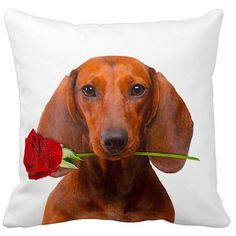 Show your love for your furry friend with this Valentine's Dachshund Brown With a Rose 16-inch Throw Pillow. Made from 100-percent polyester with 4-inch polyfill, it features a real dog image with dye