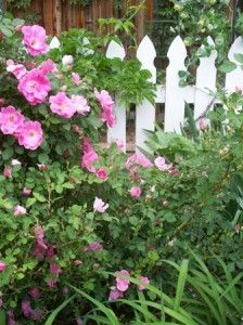 Cottage gardens are filled with old-fashioned favorite flowers, like shrub roses, hollyhocks, lilies and honeysuckle, with garden structures for them to climb on.