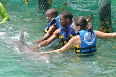 There is nothing like your first dolphin encounter    http://www.dolphindiscovery.com/anguilla/anguilla-location-overview.asp