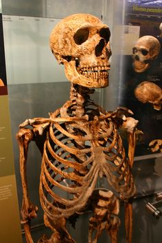 Neanderthal skeleton by Ryan Somma, via Flickr