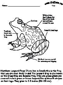 Well diagram of frog residential electrical symbols frog activity sheet labeling a northern leopard frog beginner rh pinterest com frog mouth diagram frog heart diagram ccuart Gallery