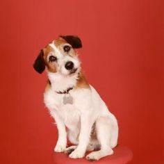 Eddie (Frasier) - for real love this dog.