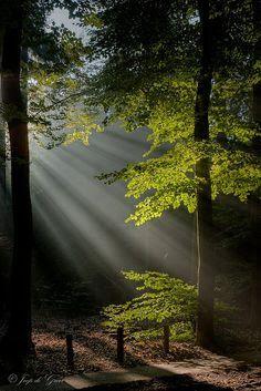 luce #bluedivadesigns.wordpress.com