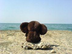 Cheburashka :)