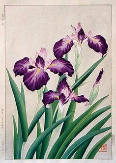 Iris, Purple  by Kawarazaki Shodo, 1951  (published by Unsodo)