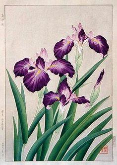 hanga gallery . . . torii gallery: Iris, Purple by Kawarazaki Shodo