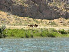 Horses - Ili River, Kazakhstan