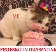 Best every day, morning, afternoon, night  funny quarantine meme of ourselves during these days, staying safe at home.  Clearly, this sweet, beautiful, cute baby cat is showing us, how happy and grateful we can be just by finding ourselves sharing this very delicious cake recipe called #Pinterest Thank you so much for your tastiness! Cute Baby Cats, Dog Memes, Galaxy Wallpaper, Best Memes, Rescue Dogs, Fur Babies, Grateful, Something To Do, Dog Lovers