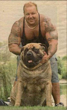 2 of 2:  this one seems to be the real picture:  Power lifter John Flynn with his English mastiff Hercules, who was the world's heaviest dog according to the Guinness Book of World Records before he died ... the brawny pooch tipped the scales at 282 lbs., heavier than many NFL defensive ends.
