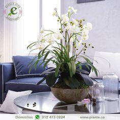 Las Orquídeas son plantas que requieren estar en un  espacio bien iluminado, pero sin recibir la luz directa del sol. Haz tu pedido en Bogotá al  312 473 0224 #RegalaVidaRegalaPiante #TipsCuidadoPiante #CuriosidadesPiante #IdeasDeRegalos #Flores #Únicas  #Orquídeas #Decoración #Estilo #Elegancia #Colombia #Bogotá #HazTuPedido
