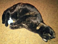Melissa's Mochas, Mysteries and Meows: Happiness is a Blue Ball #RecipeForMoments