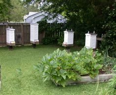 Honeybees-by-the-Sea Apiary