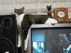 猫のこの懈さが好きだ。犬よりね!