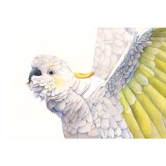 Cockatoo Watercolor Painting Print of watercolor painting A3 largest... ($33) ❤ liked on Polyvore