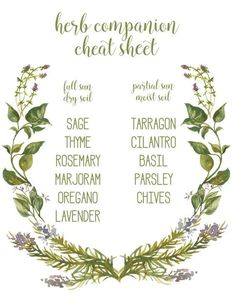 Herbs Gardening herb companion cheat sheet - mint alone, spreads out! - Are you ready for spring? I'm getting ready with this fun herb garden and printable herb companion cheat sheet. Organic Gardening, Gardening Tips, Vegetable Gardening, Gardening Quotes, Urban Gardening, Kitchen Gardening, Fairy Gardening, Gardening Books, Arizona Gardening