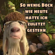 This is how I feel every day - Guten Morgen Lustig - Enschulung Albert Einstein Quotes, Funny Comments, Thing 1, Funny Animal Pictures, Man Humor, How I Feel, Puns, Haha, Funny Memes