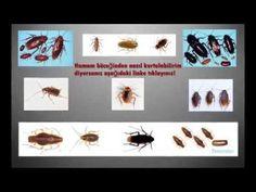 Hamam Böceği İlaçlama 0212 451 28 88 / 0216 583 03 11 Garantili İlaçlama