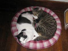 kitty yin/yang