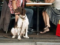 Best dog-friendly restaurants in NYC to bring your pet to