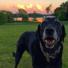 Friday Night Sky. #katanddog #lakeminnetonka #lab #labs #lablife #lablove #labrador #lablovers #labradors #labstagram #laboftheday #labsofinsta #labradorable #labsofinstagram #labradorretriever #labradorretrievers #labradorsofinstagram #retriever #retrievers #retrieversgram #retrieveroftheday #retrieversofinstagram #worldoflabs #minnesota #mn  #dog #dogs #blacklab #blacklabs #blacklabrador #blacklablovers #blacklaboftheday #labradorblack