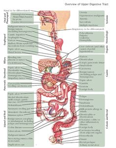 Overview of Gastrointestinal Bleeding Bleeding is a common symptom of both benign and malignant disorders of the digestive system. Intestines Anatomy, Gastrointestinal Bleeding, Medicine Notes, Nuclear Medicine, Science Notes, Medical Anatomy, Body Systems, Anatomy And Physiology, Nursing Students