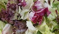 How to Grow Radicchio Cabbage, Vegetable Gardening, Vegetables, Green, Plants, Outdoors, Salads, Veggie Gardens, Home Vegetable Garden