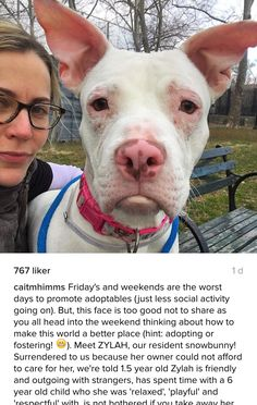 11/31/16 ZYLAH A1088851 IS AT NYC ACC!! PLEASE GET HER OUT OF THERE BEFORE THEY MURDER THIS PRINCESS TOO!! /ij https://www.instagram.com/p/BOqeraOBb8R/?hl=nb